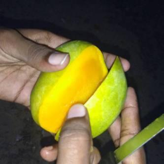 Salemmango_salem+mango