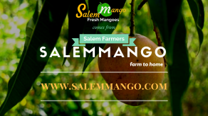 salemMango+salemmango+mangoes+manga
